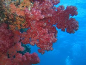 Somosomo Straits Fiji
